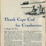 Wareham Cranberries 3
