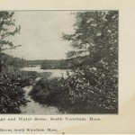 foliage and water scene