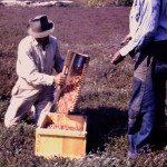 9-28-1940-cape-cod-cranberry-pickers